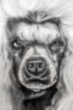 Poodle_Front_Face_Detail_02717.jpg
