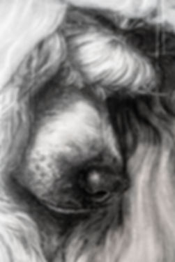 Poodle_Profil_Right_Detail_02718.jpg