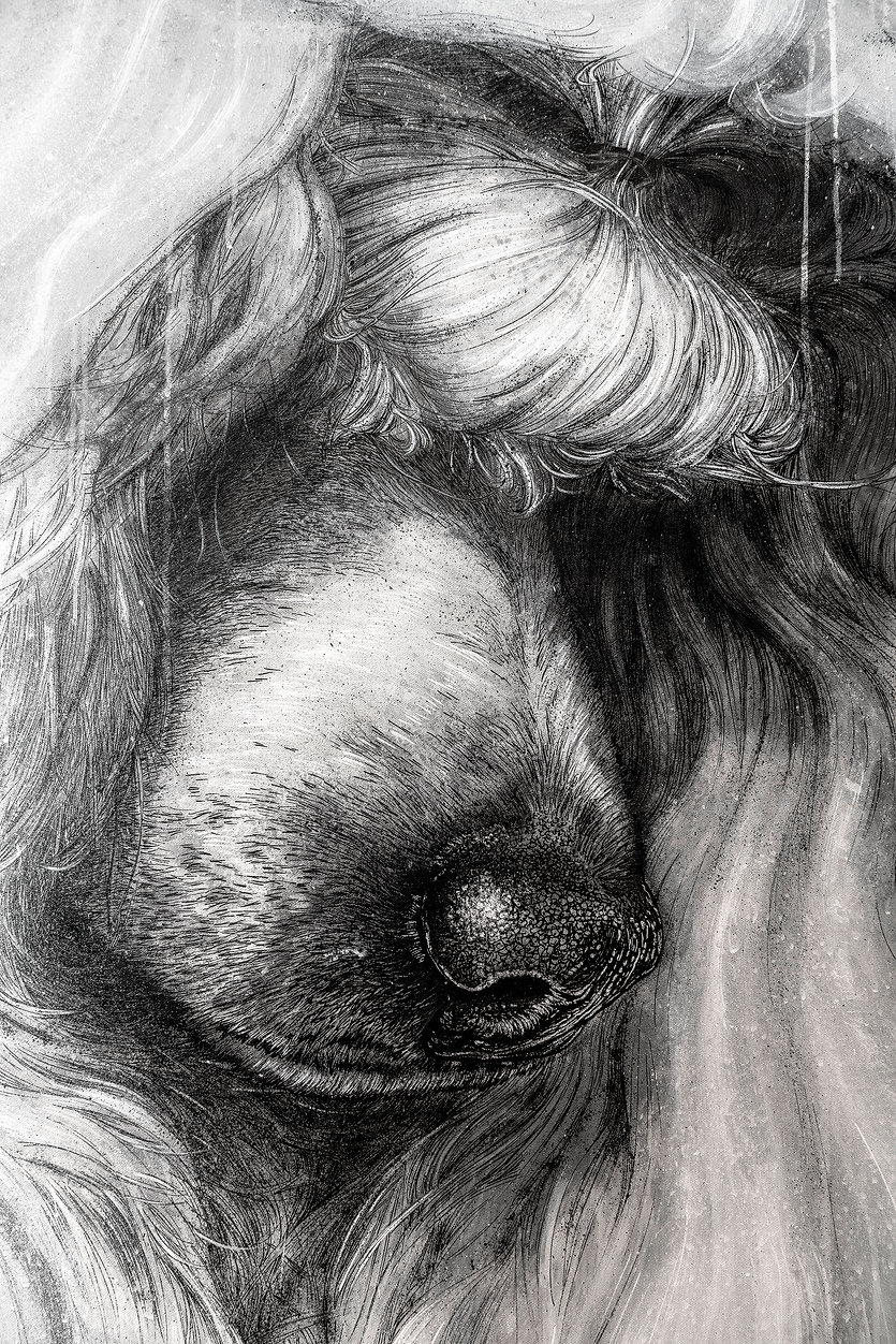 Poodle_Profil_Right_Detail_02718.jpg