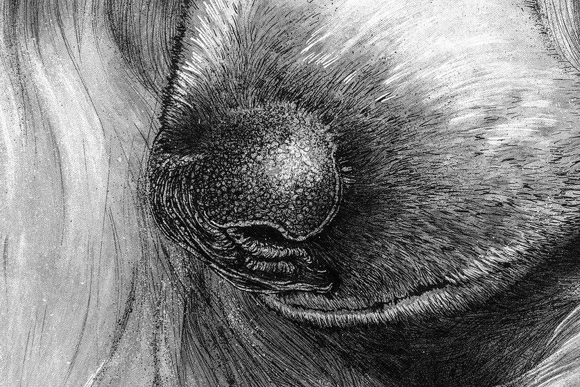 Poodle_Nose_Detail_02723.jpg