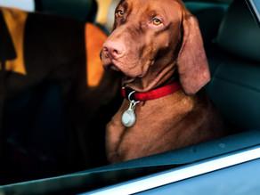 Transportez vos animaux de compagnie en toute sécurité