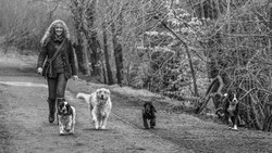 Me and dogs 2018-039-Edit_edited.jpg