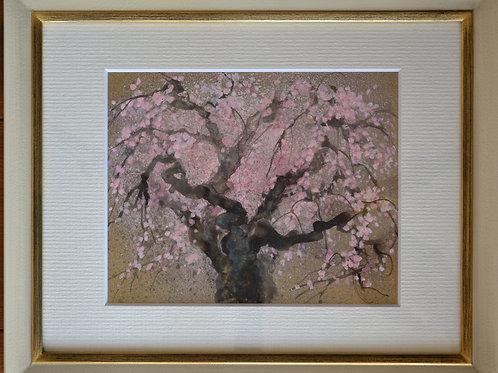 5.「里帰りの桜」