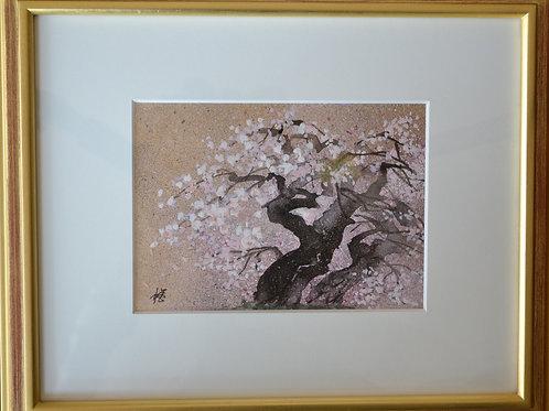 2.「めおと桜」