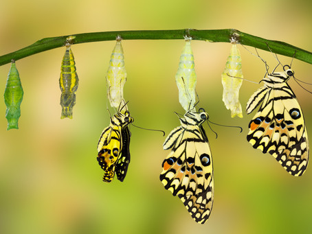 THE 5 C's of TRANSFORMING