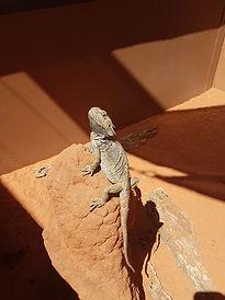 reptile centre.jpg