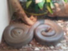 reptile centre2.jpg