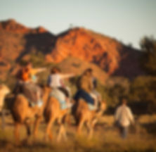 Sunset camel ride Alice Springs