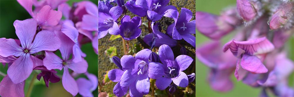 6.Violet.jpg