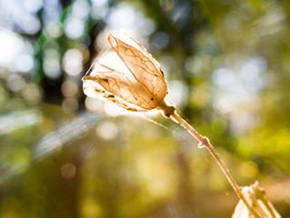 Bluebells in Autumn