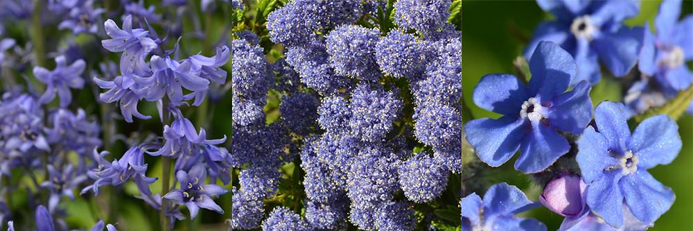5.Blue.jpg