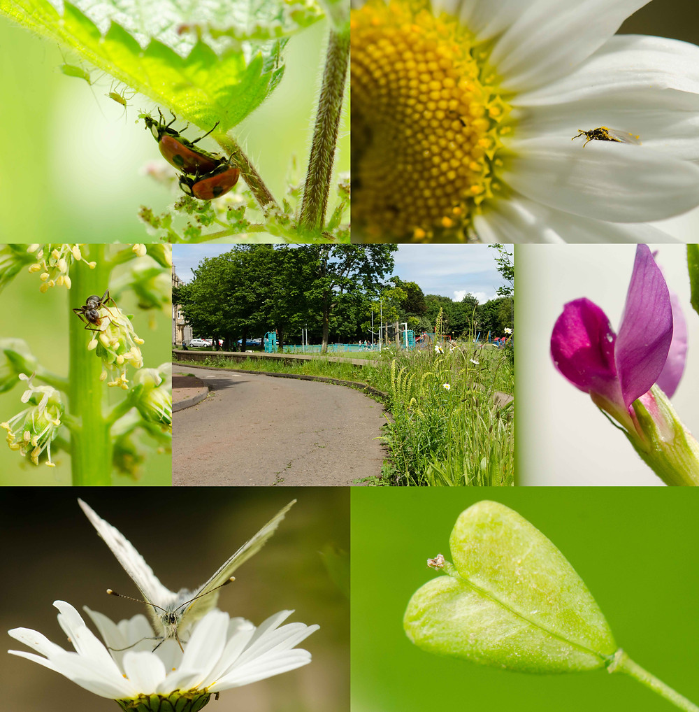 "Taking ""A Closer Look"" at a verge in a park (centre picture). The surrounding images show what I found."