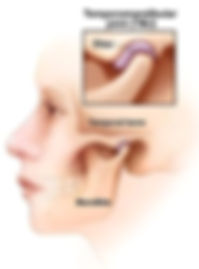 TMJ, Anatomy of the Jaw Joint