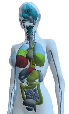 ES-Teck Body Scan