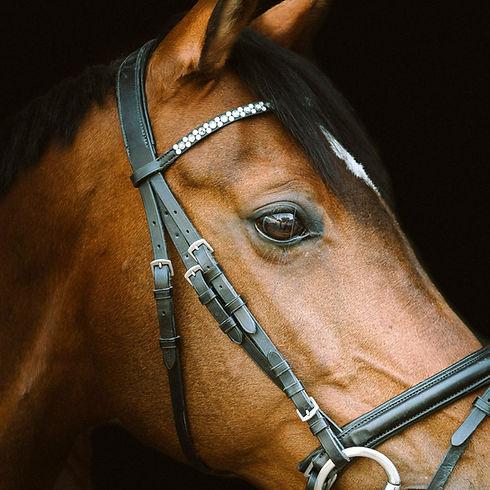 Behandlung / Pferde