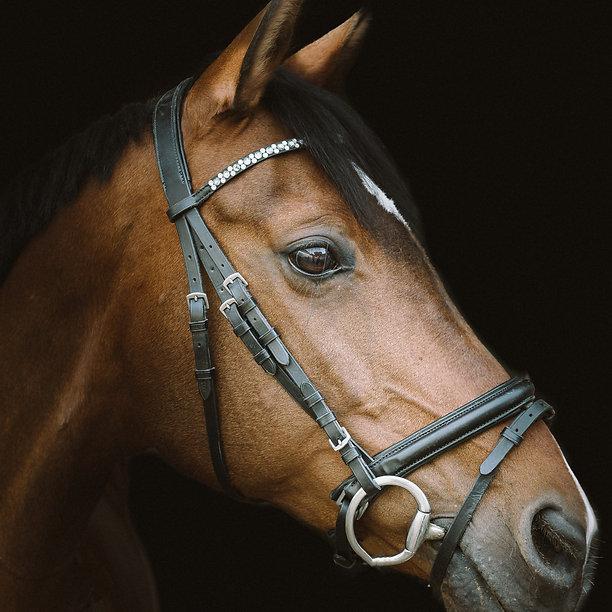horse-4330166_edited.jpg