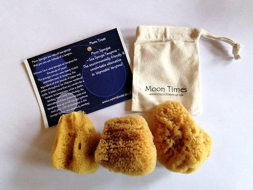 Moon Sponges