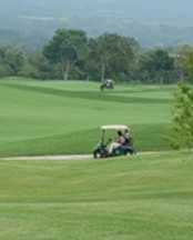 grass-structure-sport-field-lawn-meadow-