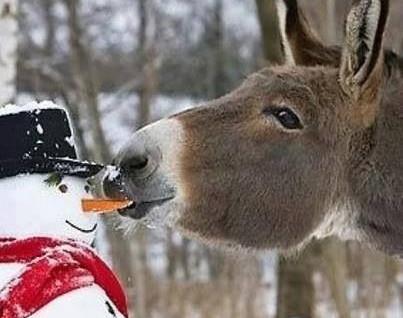 Un  Noël ressourçant à tous !