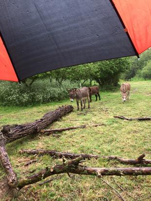 Le parapluie de Payz'ânes, épisode 1