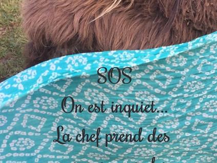 SOS de Payz'ânes aux confins du confinement ...