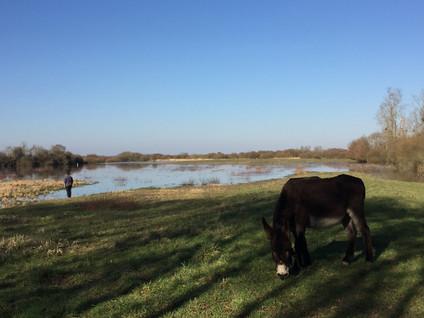 Sous le soleil, une balade au pas de l'âne...