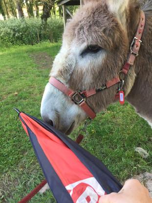 Le parapluie de Payz'ânes, épisode 2