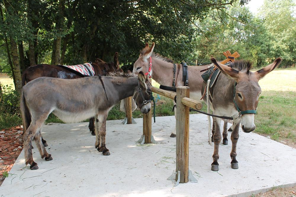 Nos 4 amis prêts à nous accompagner!