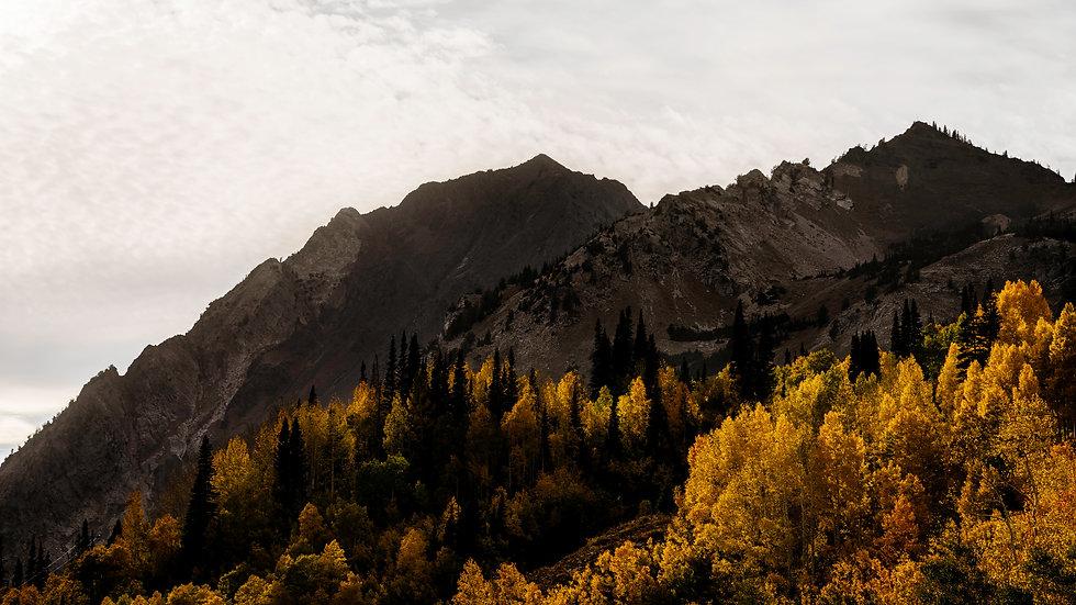 Superior Autumn