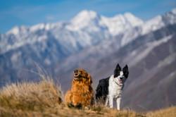 Dogs in Utah