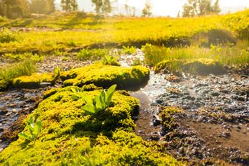 Vegetation in Alaska Basin
