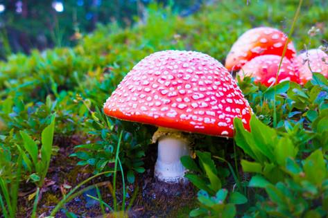 Mario Mushrooms in Crested Butte, Colorado