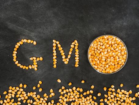 GMO in Agriculture - World's Scientific Breakthrough, Society's Public Fear