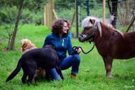 chiens et poney shetland