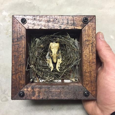 Boston city rat bones and an abandoned birds nest.