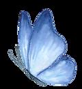 papillon bleu.png