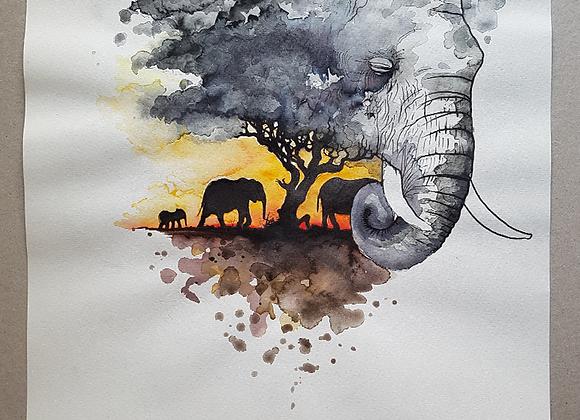 Ivory Sunset - Fine Art Print