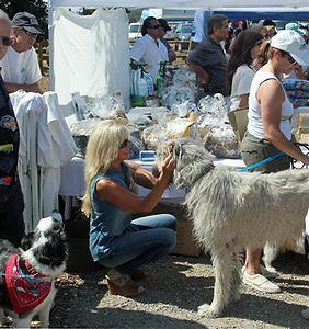 Irish Wolfhound share with KT