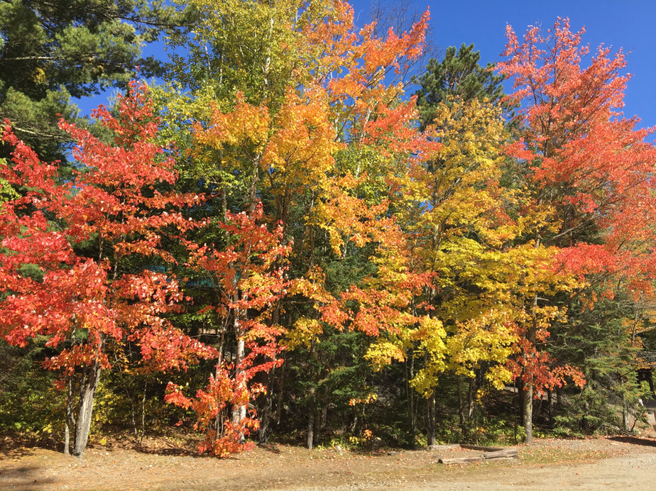 Fall colours at Ross' Camp