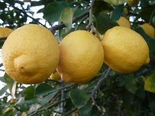 Citrons - Directissimo68