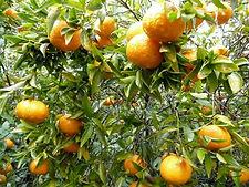 Mandarines - Directissimo68