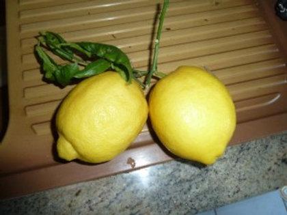 Citrons (caisse 11 kg environ)