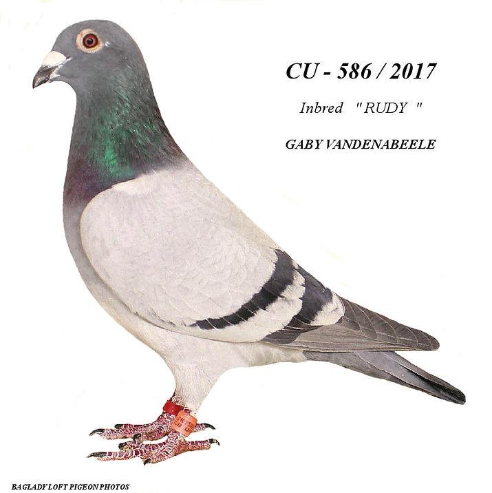 CU 586 B.jpg