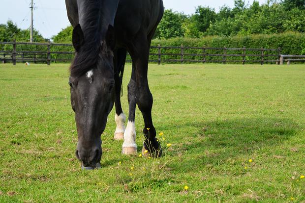 Westwood Horses