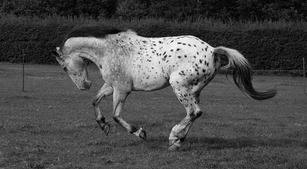 The Westwood Horses