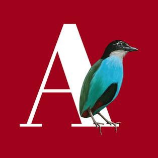 Illustrated bird alphabet