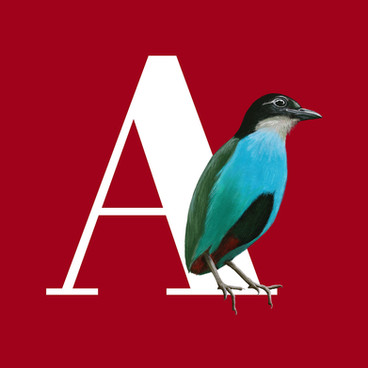 Illustrated bird alphabet