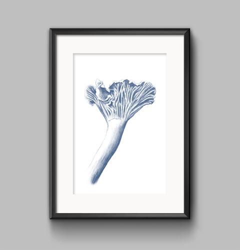 chanterelle sketch print.jpg