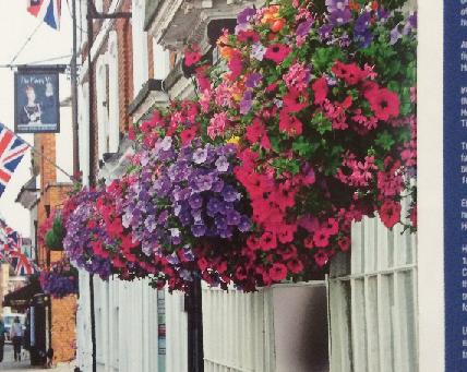 Order your Summer Hanging Baskets
