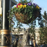 Order your Winter Hanging Baskets